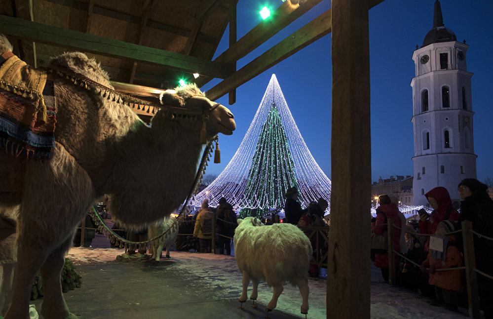 Un chameau et un mouton participent à un spectacle de Noël sur la place de la Cathédrale à Vilnius (Lituanie)