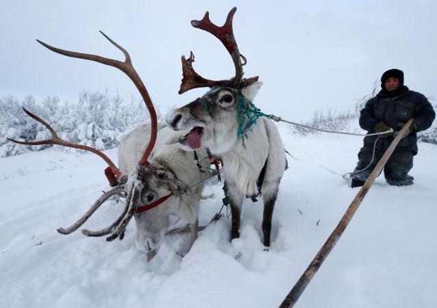 La vie rude de l'Arctique russe