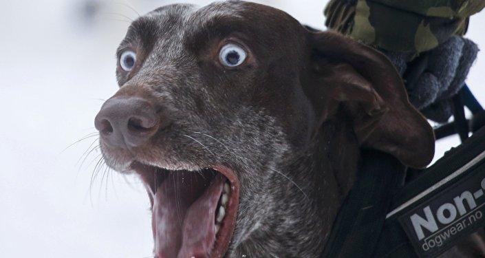 Quand «s'entendre comme chien et chat» n'est pas qu'une expression (vidéo)