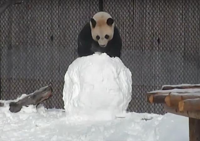 Un panda rencontre un bonhomme de neige