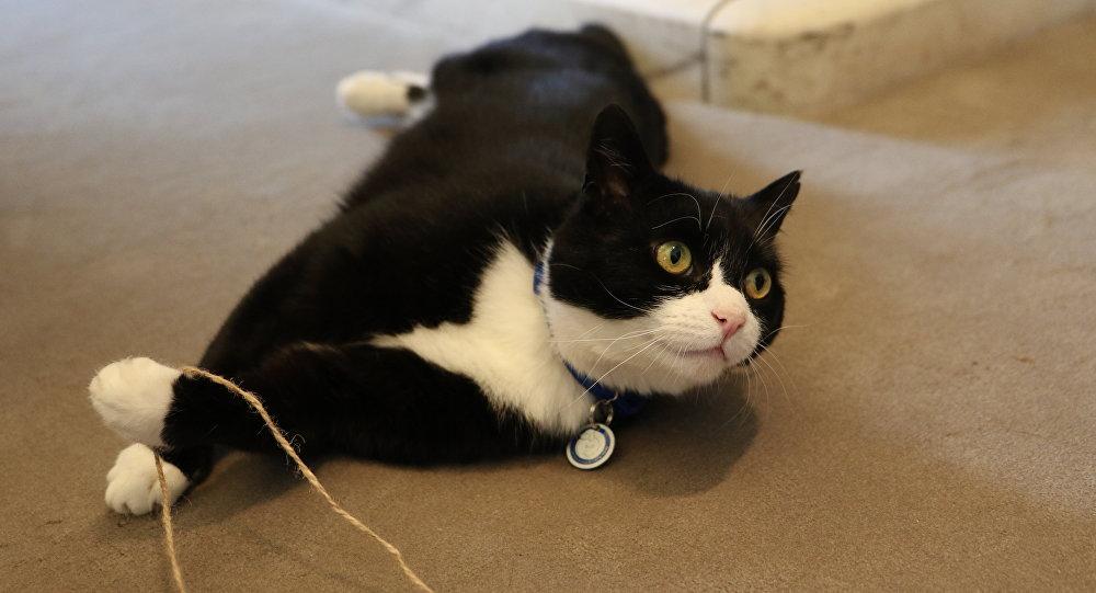 Le chat du Foreign Office britannique accueilli par la garde d'honneur