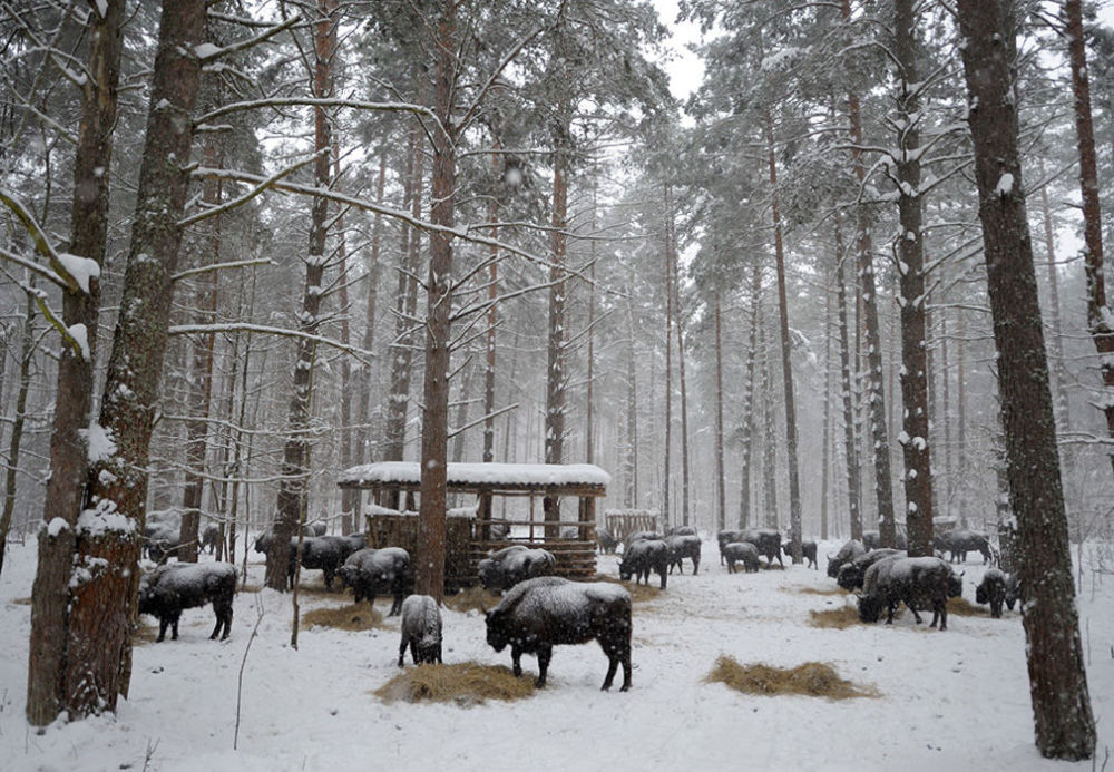 La grandeur des réserves naturelles russes