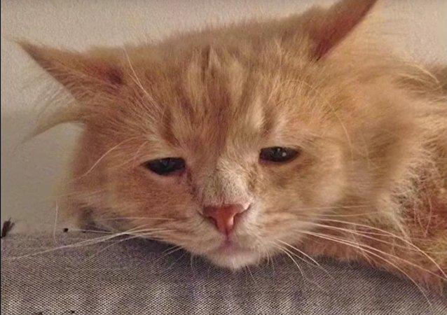 Le chat le plus triste de Russie devient viral sur Internet
