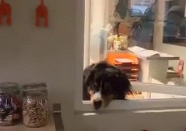 Quelqu'un a dit biscuits? Me voilà!