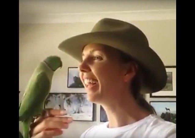 Un perroquet des plus heureux