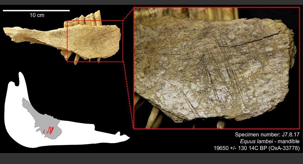 The contribution of radiocarbon dating in the study of the Bronze Age cemetery of Il sagit dun dépôt en contenant périssable, qui comprend un amas dos brûlés.