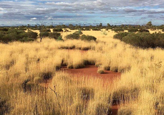 Comment les «cercles de fées» naissent-ils dans le désert du Namib?