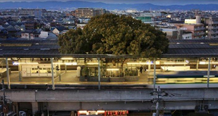une gare construite au Japon autour d'un arbre vieux de 700 ans