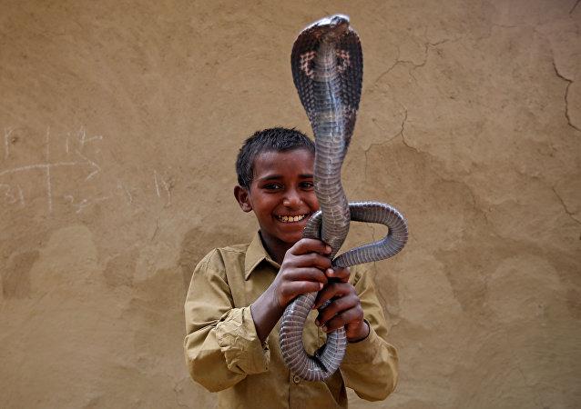 L'art de charmer les serpents