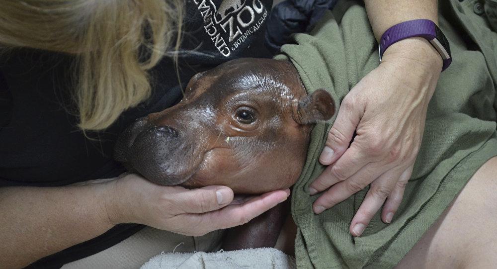 Un garçon d'honneur inhabituel à des fiançailles dans un zoo (photo)