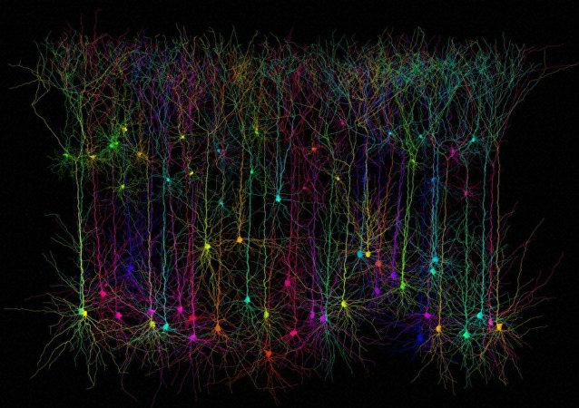 Neurones pyramidaux simulés par ordinateur
