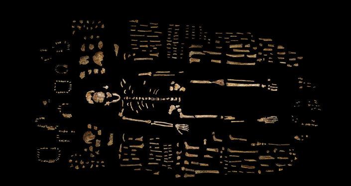 Un squelette fossilisé