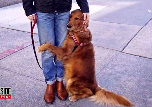 Les câlins gratuits de cette chienne embrasent les réseaux sociaux