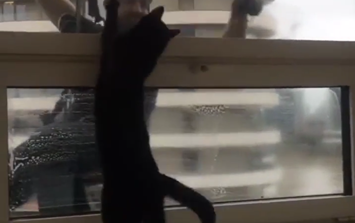 Le chat qui adore aider les laveurs de vitres