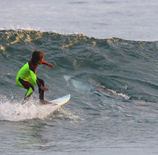 L'attaque d'un requin blanc contre deux surfeurs filmée par un drone
