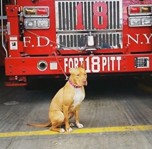 Un chien abandonné guette les incendies à New York