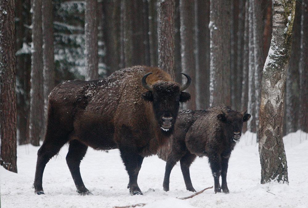 Les animaux rares de Russie