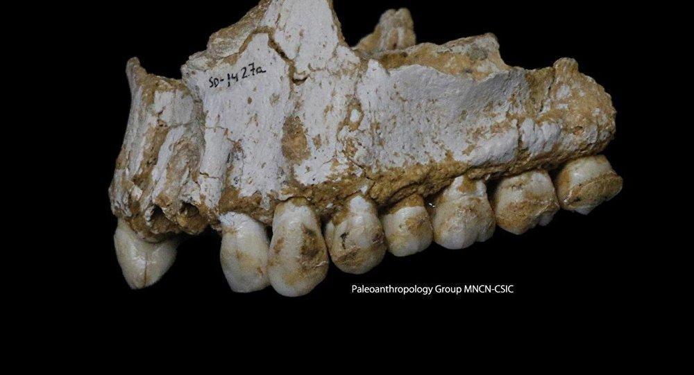 Des antidouleurs pour l'homme de Néandertal il y a 48 000 ans