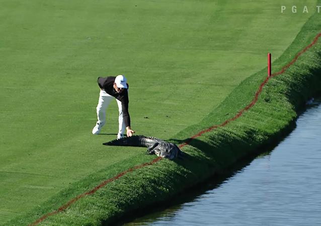 Ce golfeur n'a pas voulu partager le green avec un alligator