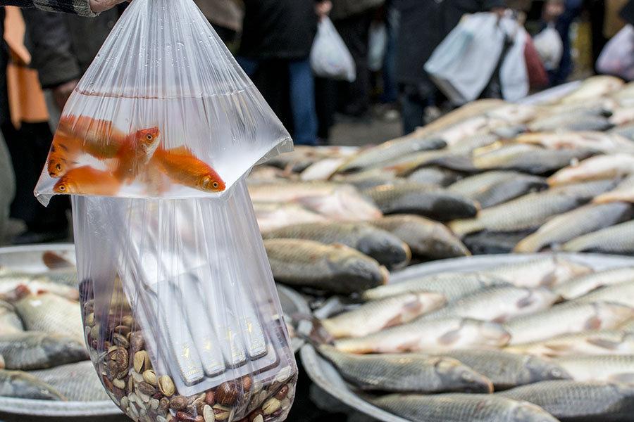 Les poissons rouges sont vendus dans la plupart des cas sans bocal – simplement dans des sacs plastiques.