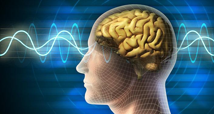 Un cerveau humain