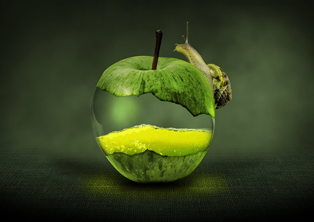 Ein Apfel (Symbolbild)