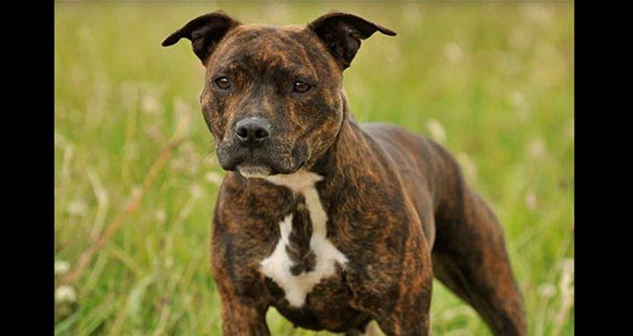 Un chien tue son maître… après lui avoir sauvé la vie