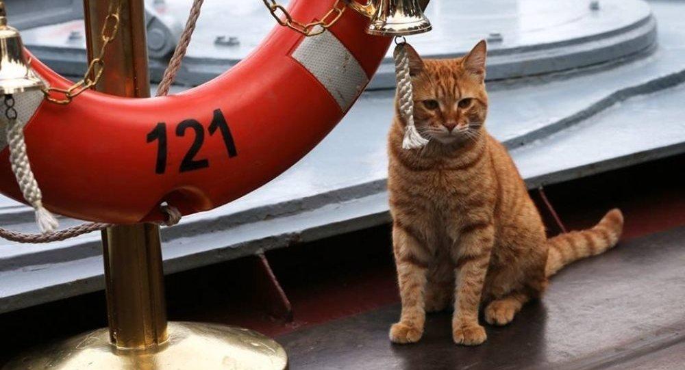 Le premier chat-matelot au service de la flotte militaire russe en Syrie