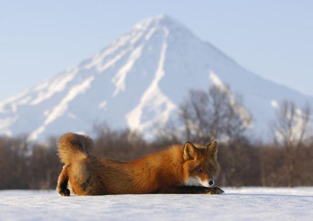 Comme sur un volcan. La réserve naturelle de Kronotski au Kamtchatka