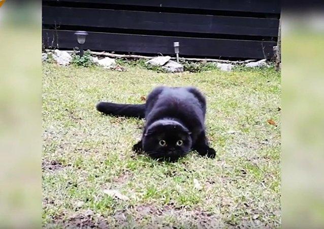 Cet adorable petit chat a les yeux de Krokmou