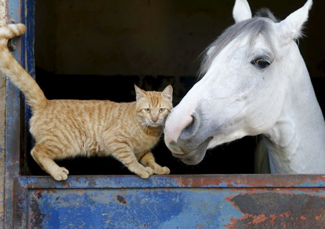 Un chat et un cheval