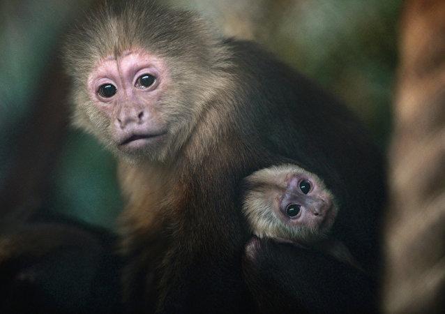 Des singes