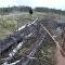 Un arc et des flèches contre un ours enragé