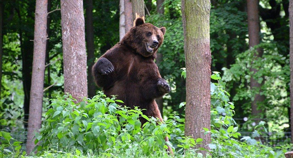 Un campeur se réveille dans la gueule d'un ours