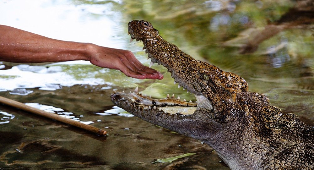 Un nonagénaire tué par un crocodile — Zimbabwe
