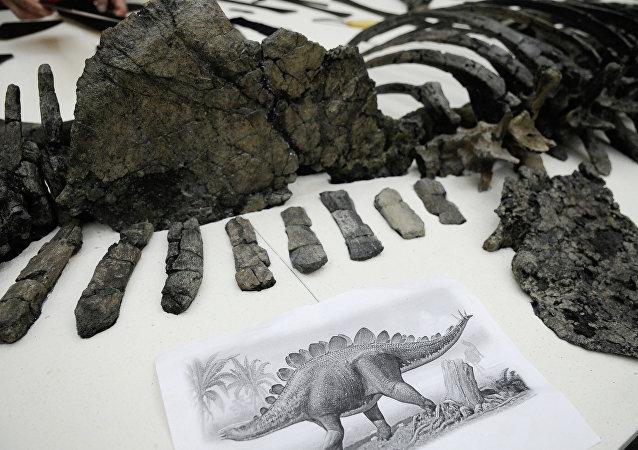 Des scientifiques russes percent le mystère de l'apparition du squelette