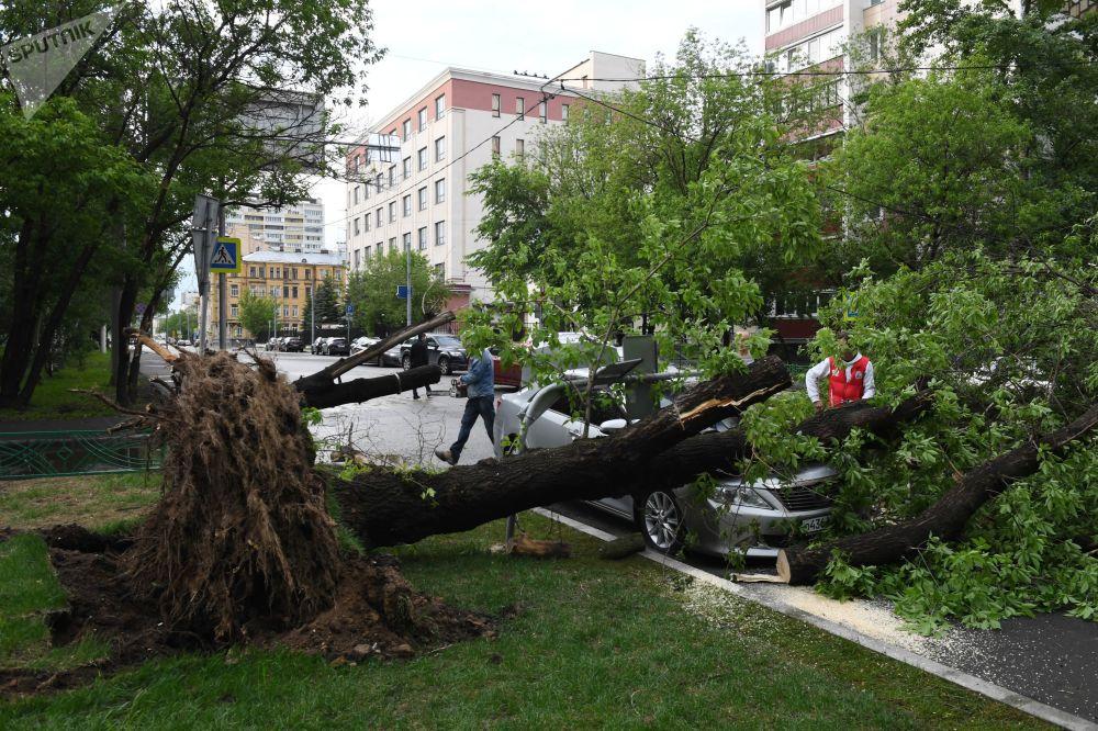 Un arbre renversé par la tempête dans une rue de Moscou