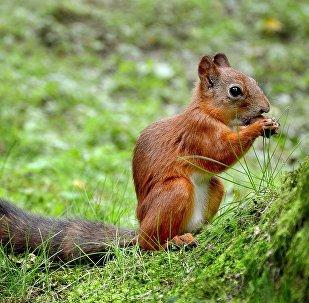Un petit écureuil