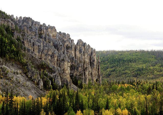 Un forêt