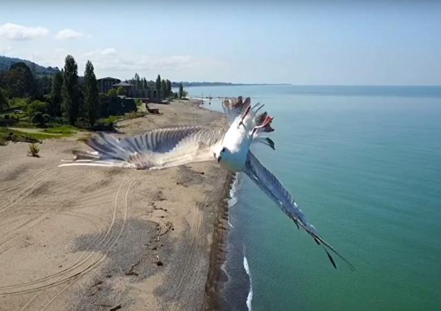 Une mouette a évité de justesse une collision avec un drone!