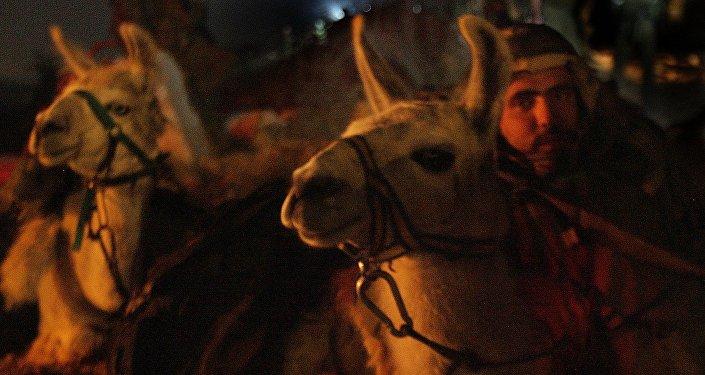 Des lamas de l'armée israélienne. Archive photo