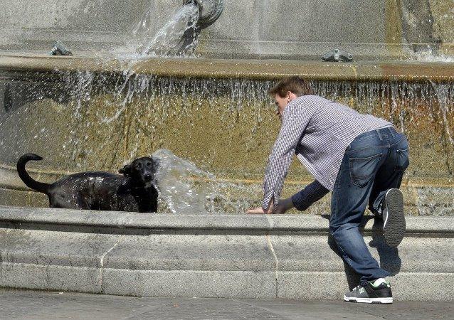Un jeune homme refroidit son chien dans une fontaine à Place Royale à Nantes le 30 juin 2015
