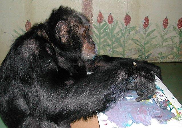 Le chimpanzé de Michael Jackson, Bubbles, 34 ans, a vendu cinq de ses tableaux