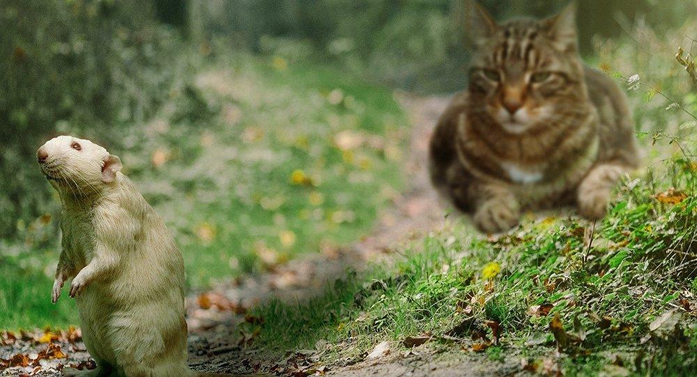 Un rat et un chat