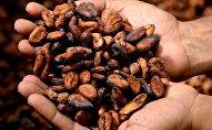 Cacao (imagen referencial)