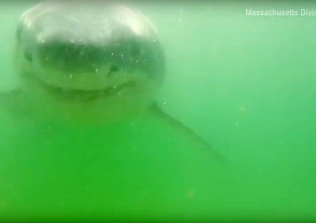 Camera meets shark!