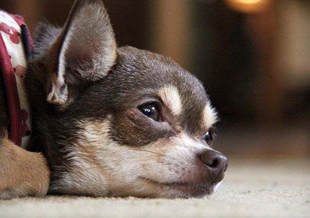 Un petit chien