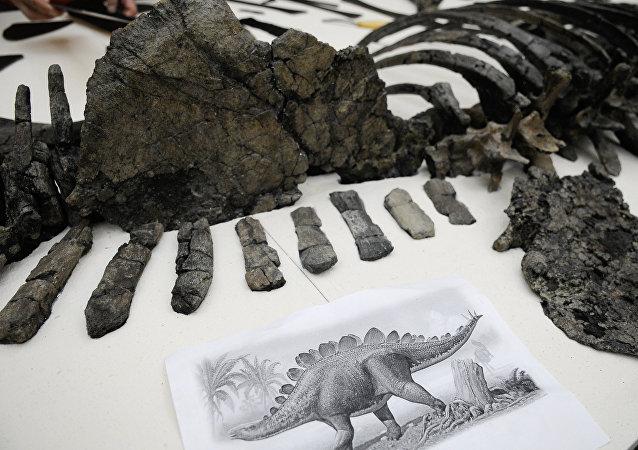 Squelette de stégosaure (archives)