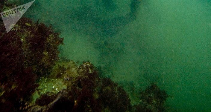 Sous la mer (photo d'illustration)