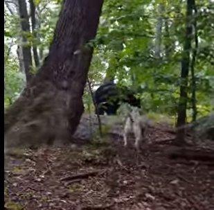 Сe chien protège son maître contre un ours